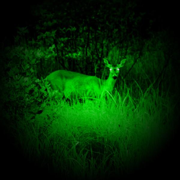 Grön / Röd / Blå - ficklampa, PAKET
